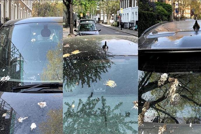 Otomobilinizdeki kuş pisliği nasıl temizlenmeli?