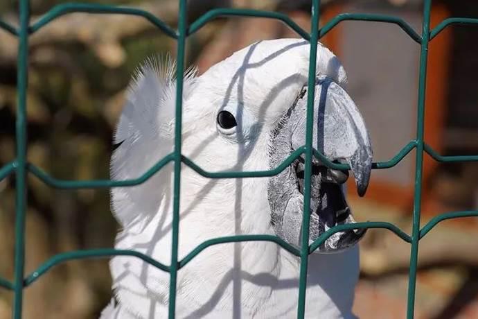 5 kez vurulan papağan kurtulmayı başardı!