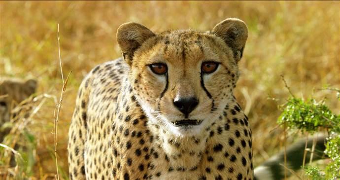 Serengeti Belgeseli BBC Earth'te başlıyor