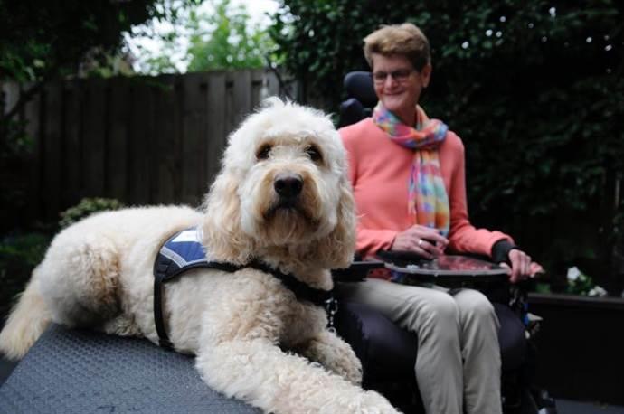 Rehber Köpeklerin önemi Engelsiz Filmler Festivali'nde anlaşılacak
