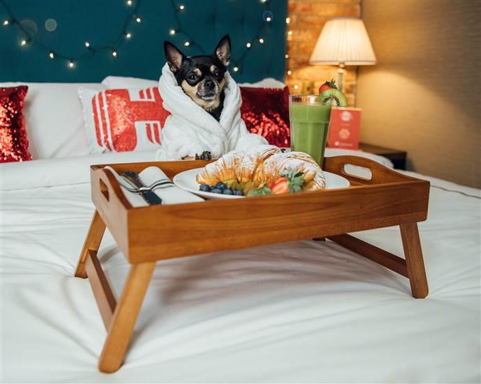 Lüks otel eleştirmeni köpekler aranıyor