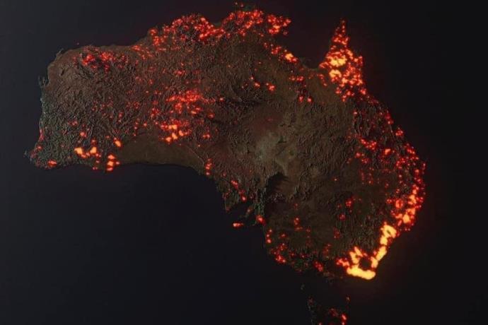 Avustralya'da bir bebek kanguru ve koala yangından böyle kurtarıldı