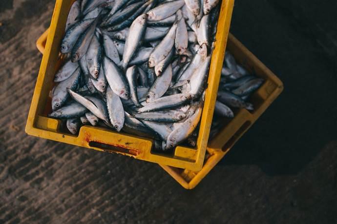 Balığın taze olduğu nasıl anlaşılır?
