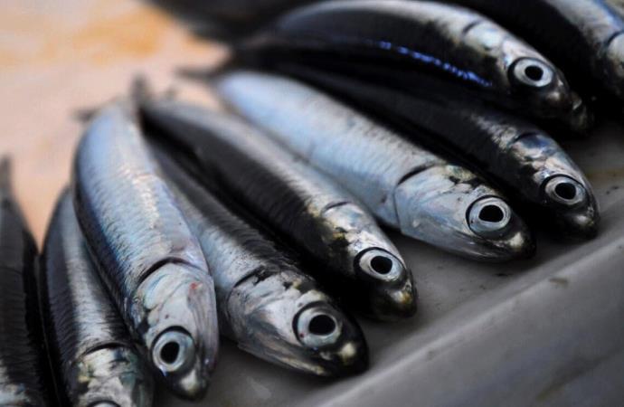 Balık fiyatları arttı! Peki, hamsi ne kadar oldu?