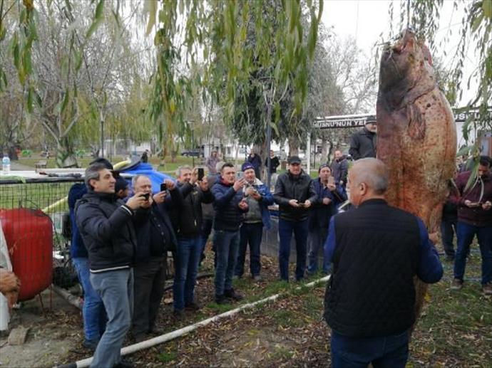 Bursa'da dev yayın balığını halk sahile akın etti