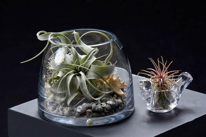 Ofisinizde Bitki Yetiştirmek İçin 5 Neden