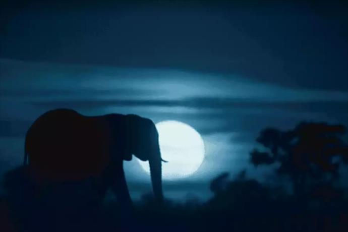 Netflix, Beren Saat'in seslendirdiği 'Dünya'da Gece'nin fragmanı yayınladı