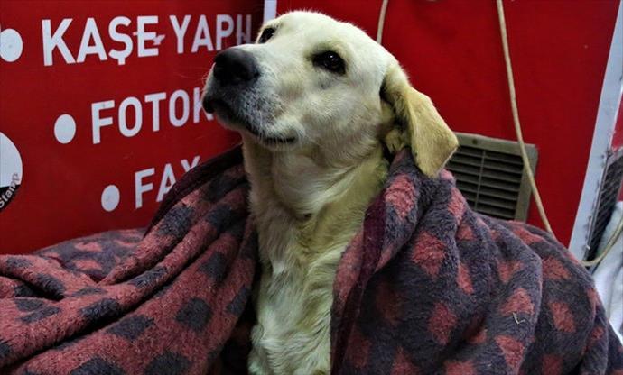Yağmur ve soğukta donan üç köpeği battaniyeyle ısıttılar