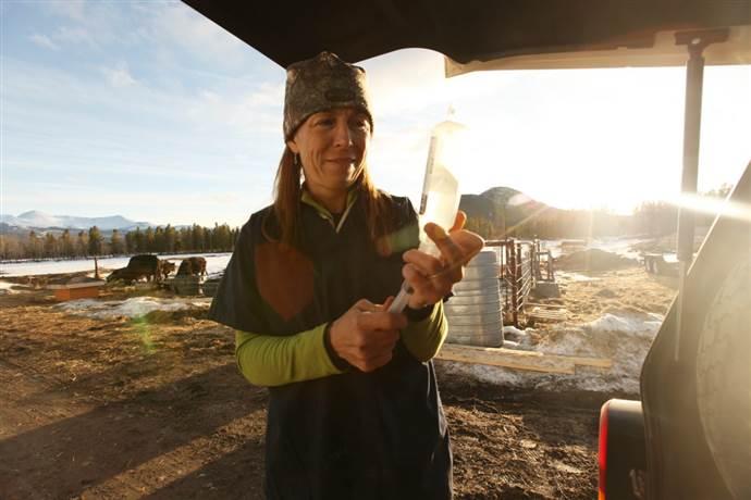 Yukon Veterineri'nin yeni Bölümleri yayına giriyor