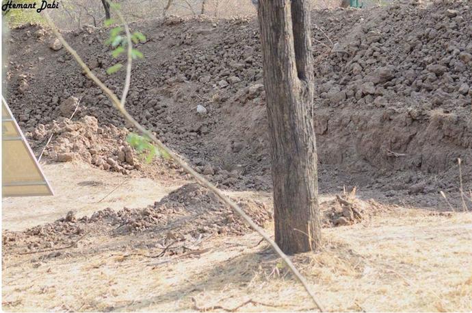 Binlerce kişi bu fotoğraftaki leoparı göremedi