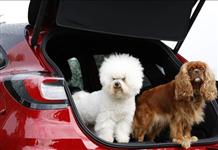 Ford, Dünya Köpek Günü'ne özel salon açtı