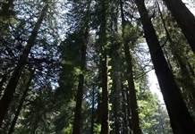 Kığılı'dan orman dostu kampanya: 1 fidan 1 can